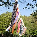 善福寺公園のこいのぼり。