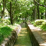 千川上水緑道整備記念・千川上水探索。