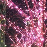 目黒川に桜の光。