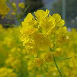 ランチ in 春の陽気の日比谷公園。
