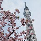 春と桜とスカイツリー。