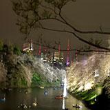 今夜で見納め?千鳥ヶ淵で夜桜とお祭り。