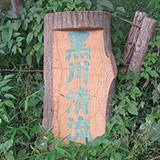 黒川清流と豊田をウォークしてみました。