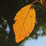駒沢公園〜横浜 三ツ池公園 紅葉ウォーク。
